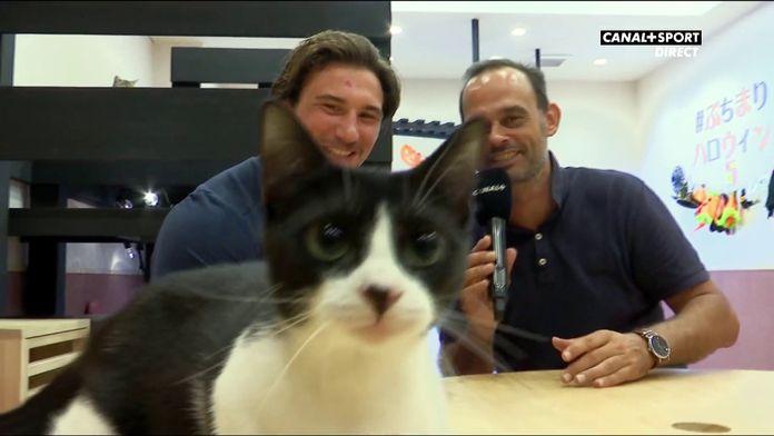 Chaionara ! Dans un bar à chats avec Camille Chat