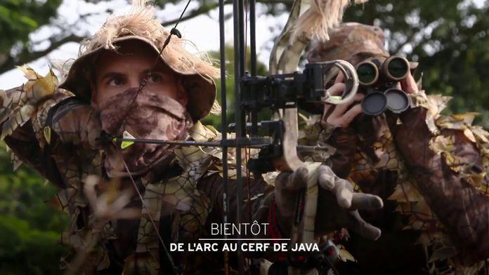 De l'arc au cerf de Java