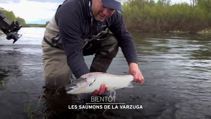 Les saumons de la Varzuga