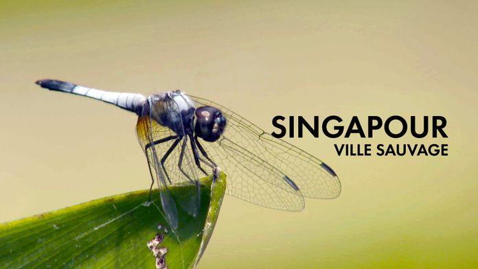 Singapour, ville sauvage