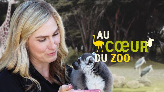 Au coeur du zoo