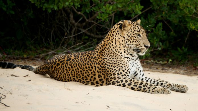 Sri Lanka, l'île émeraude