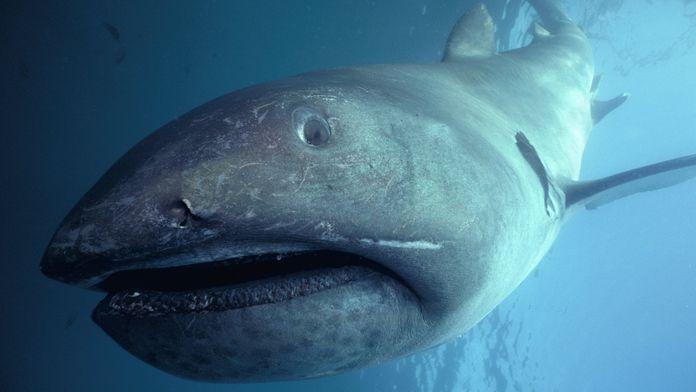 Etranges requins