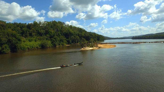 A la reconquête des forêts : Guyane, l'eldorado vert