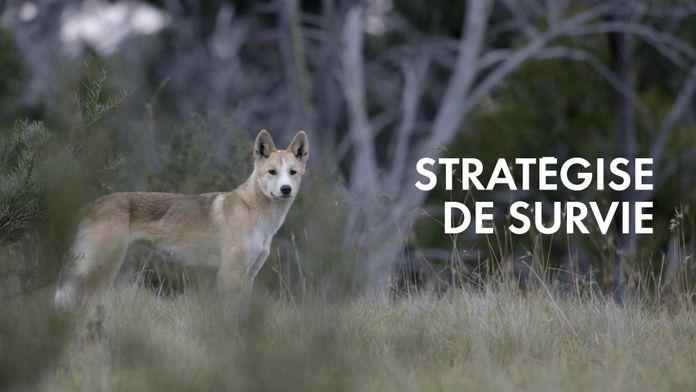 Stratégies de survie