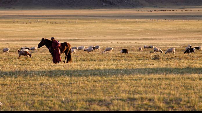 Ogui, médecin des steppes de Mongolie