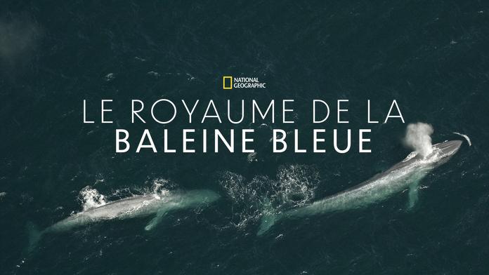 Le royaume de la baleine bleue