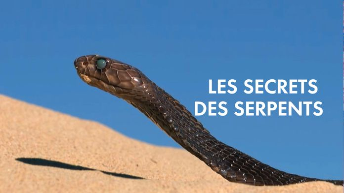 Les secrets des serpents