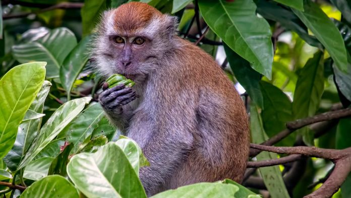 Dans le secret des primates