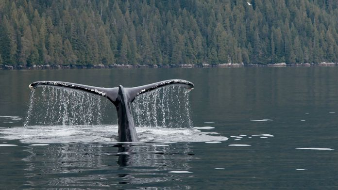 La baleine & le corbeau
