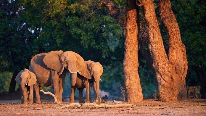 Botswana, le berceau sauvage