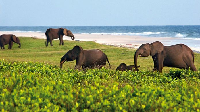 Gabon, pêche avec les éléphants