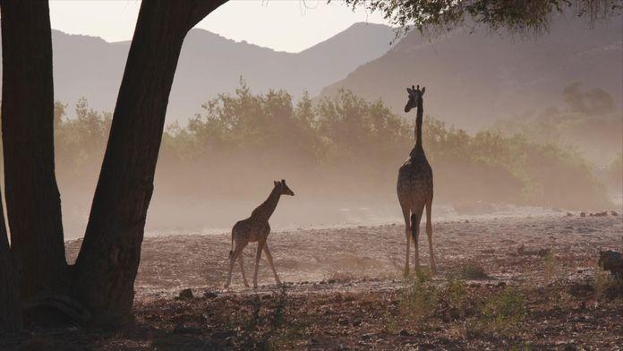 Mama żyrafa