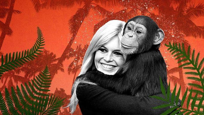 Brigitte Bardot, obrończyni zwierząt