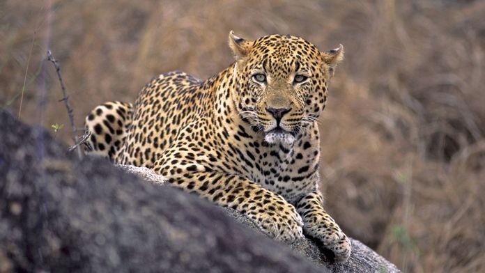 Malika, reine de la chasse
