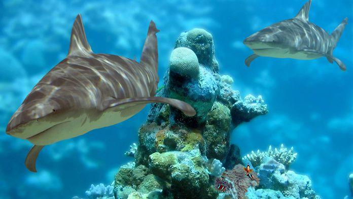 La loi des requins