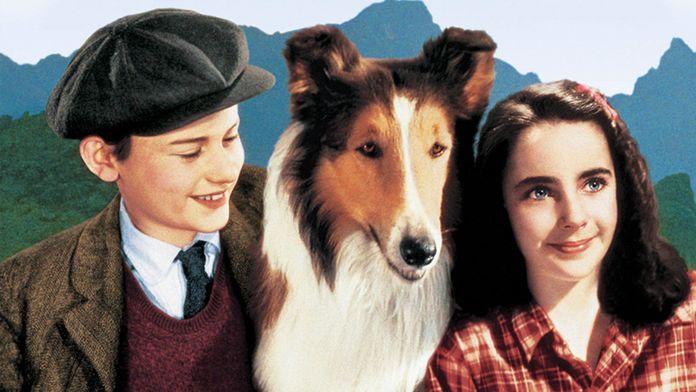 La fidèle Lassie