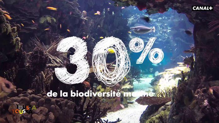 Le corail nous protège contre les caprices de la Terre