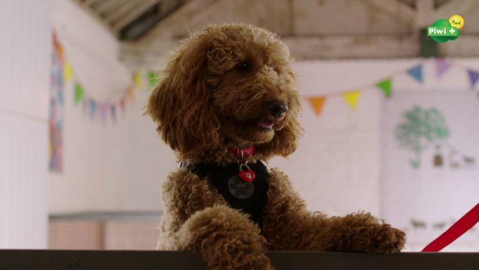 Wafle, le chien wahou