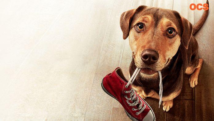 L'Incroyable aventure de Bella : un film qui a du chien